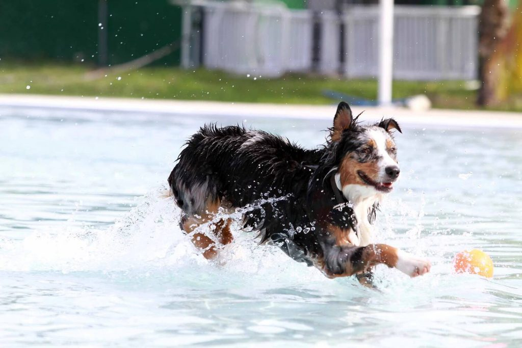 Dog Water Physical Therapy | Pawsitively Unleashed Performance Canine Rehabilitation and Conditioning