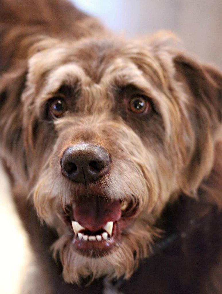 Dog Close Up   Pawsitively Unleashed Performance Canine Rehabilitation and Conditioning