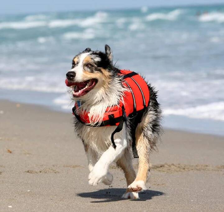 Dog on the Beach | Pawsitively Unleashed Performance Canine Rehabilitation and Conditioning