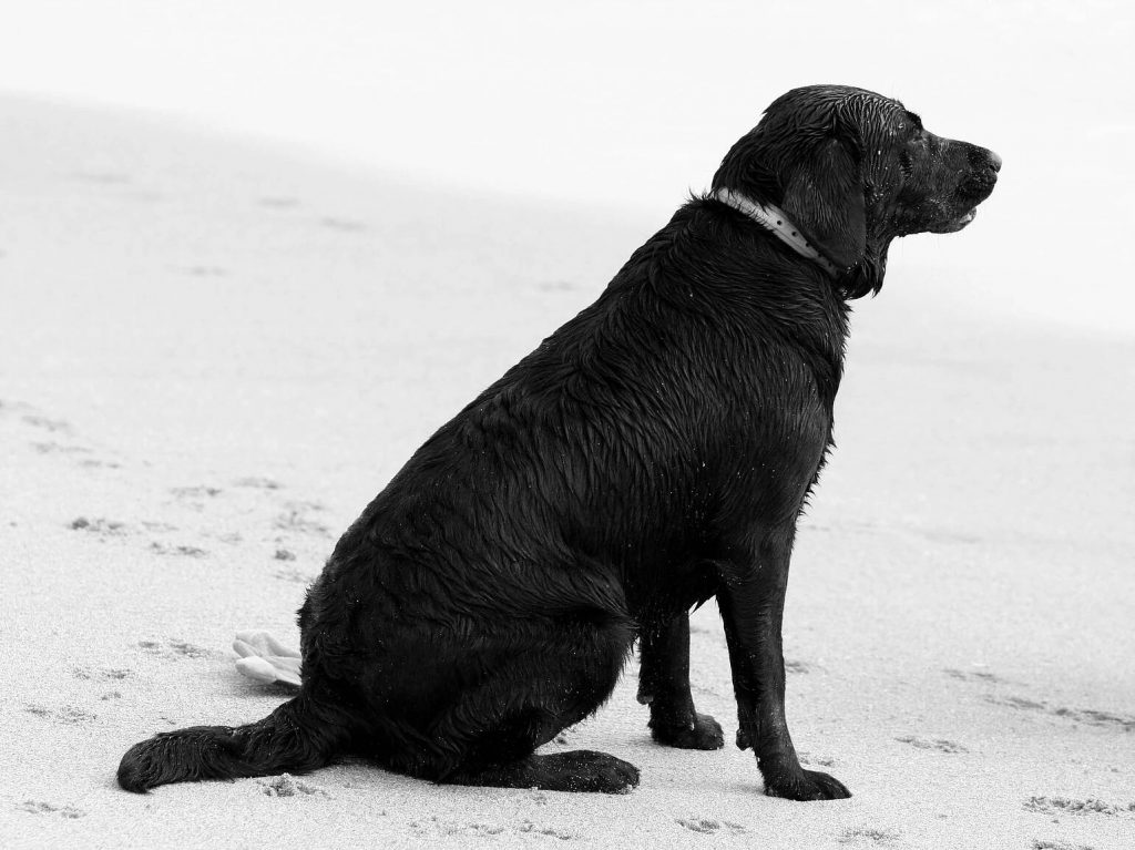 Dog on the Beach   Pawsitively Unleashed Performance Canine Rehabilitation and Conditioning