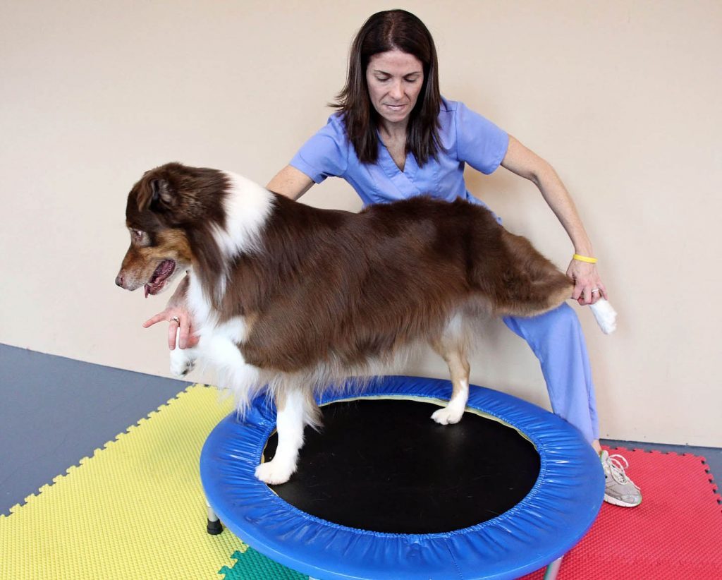 Canine Physical Therapy | Pawsitively Unleashed Performance Canine Rehabilitation and Conditioning