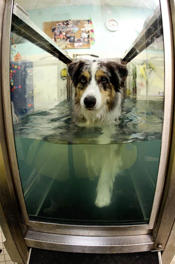 Dog Water Therapy | Pawsitively Unleashed Performance Canine Rehabilitation and Conditioning