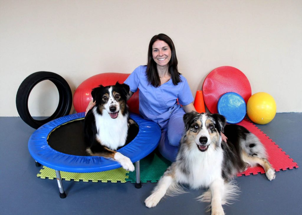 Dogs Sitting with Shari | Pawsitively Unleashed Performance Canine Rehabilitation and Conditioning