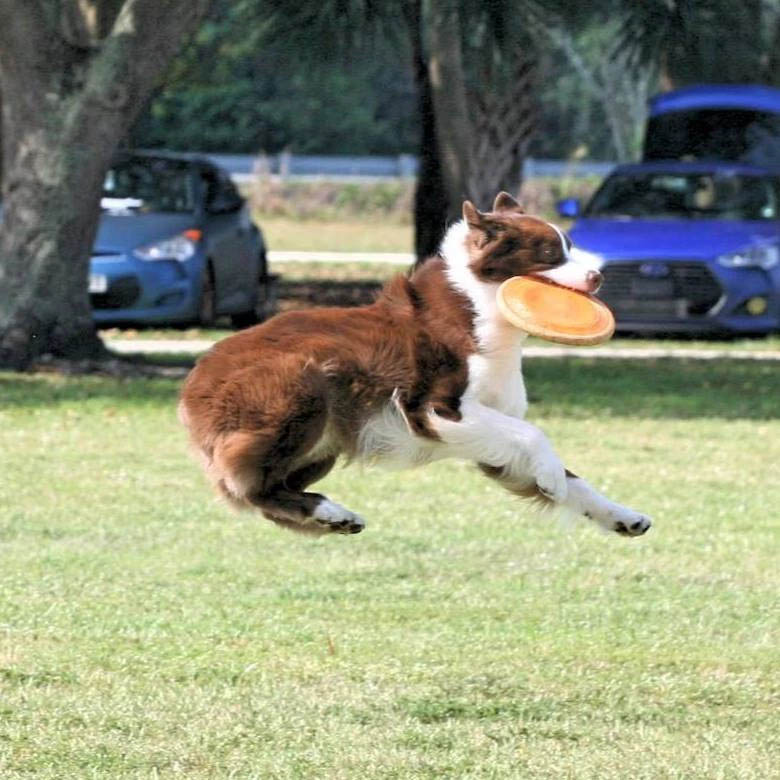 Keeping Your Dog Active | Pawsitively Unleashed Performance Canine Rehabilitation and Conditioning