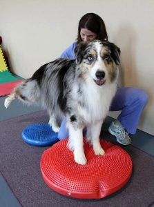 Dog Physical Therapy | Pawsitively Unleashed Performance Canine Rehabilitation and Conditioning