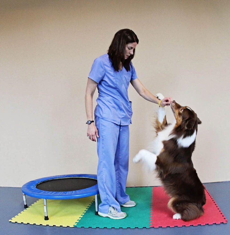 Sha;ri with Sitting Dog   Pawsitively Unleashed Performance Canine Rehabilitation and Conditioning