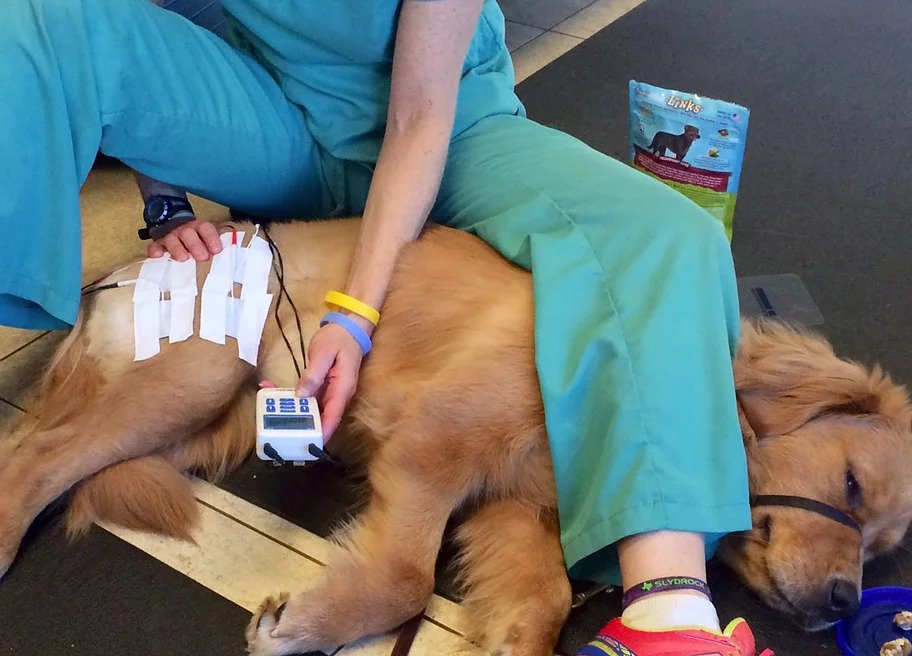Canine Electrical Stimulation | Pawsitively Unleashed Performance Canine Rehabilitation and Conditioning