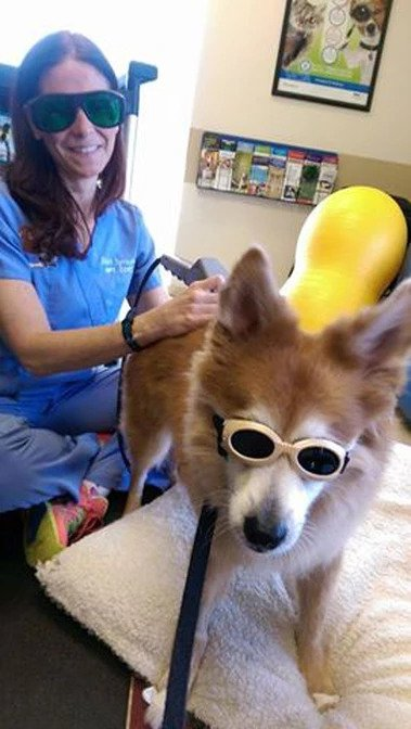 Kody in Doggles   Pawsitively Unleashed Performance Canine Rehabilitation and Conditioning