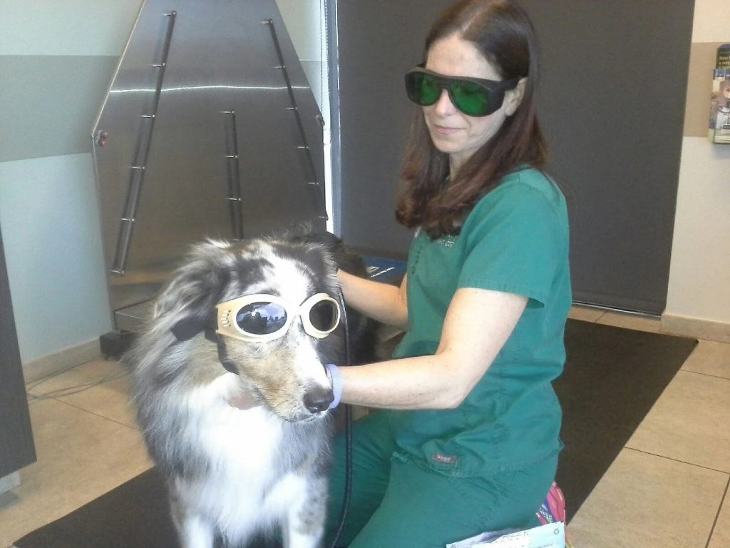 Canine Laser Treatment | Pawsitively Unleashed Performance Canine Rehabilitation and Conditioning