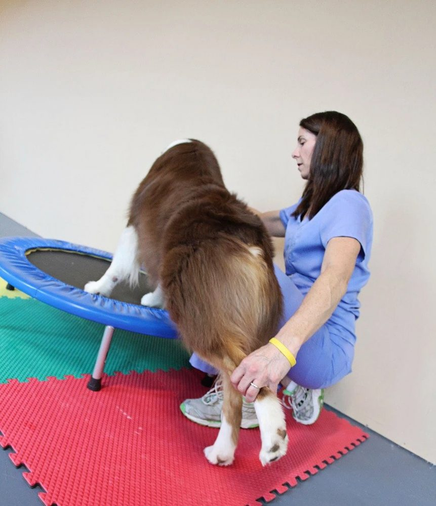 Dog Leg Stretch | Pawsitively Unleashed Performance Canine Rehabilitation and Conditioning