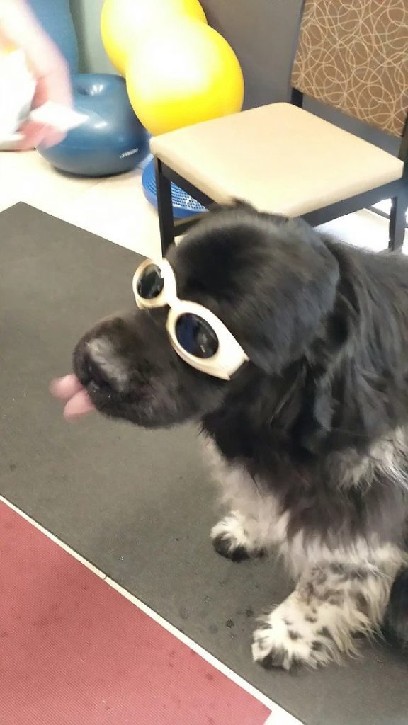 Parker with Doggles | Pawsitively Unleashed Performance Canine Rehabilitation and Conditioning