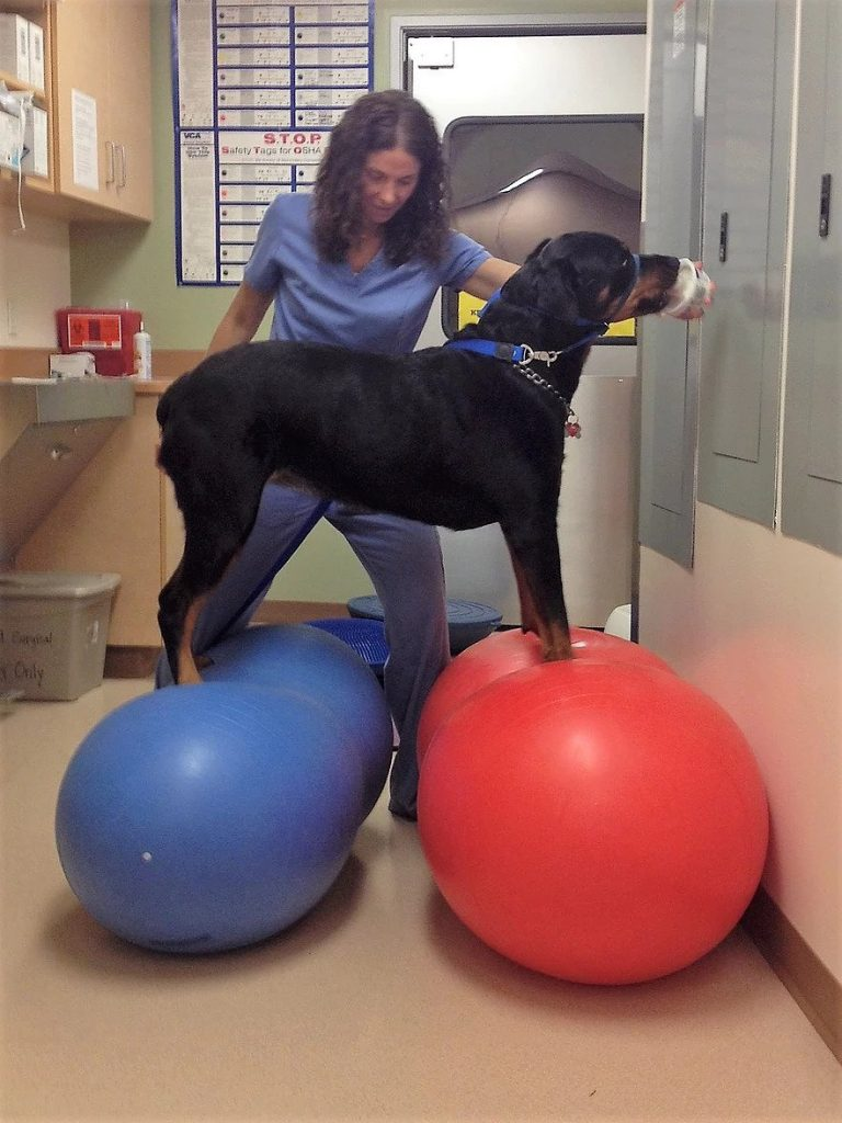 Dog Balancing | Pawsitively Unleashed Performance Canine Rehabilitation and Conditioning
