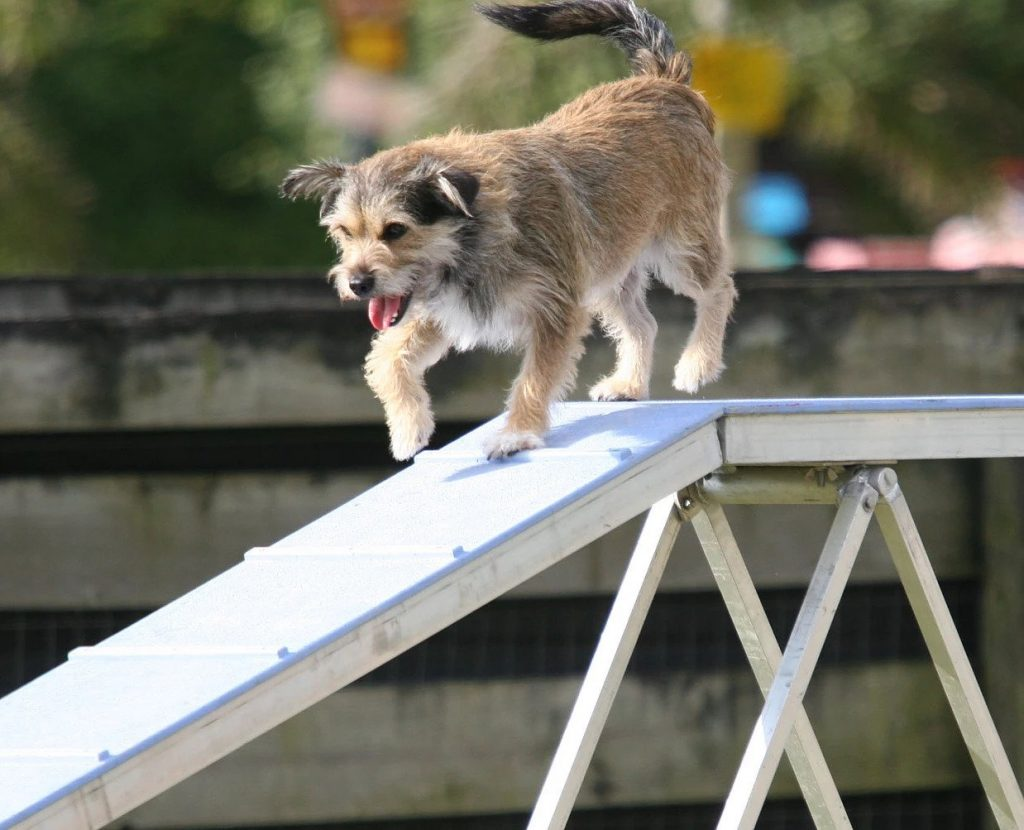 Agility | Pawsitively Unleashed Performance Canine Rehabilitation and Conditioning